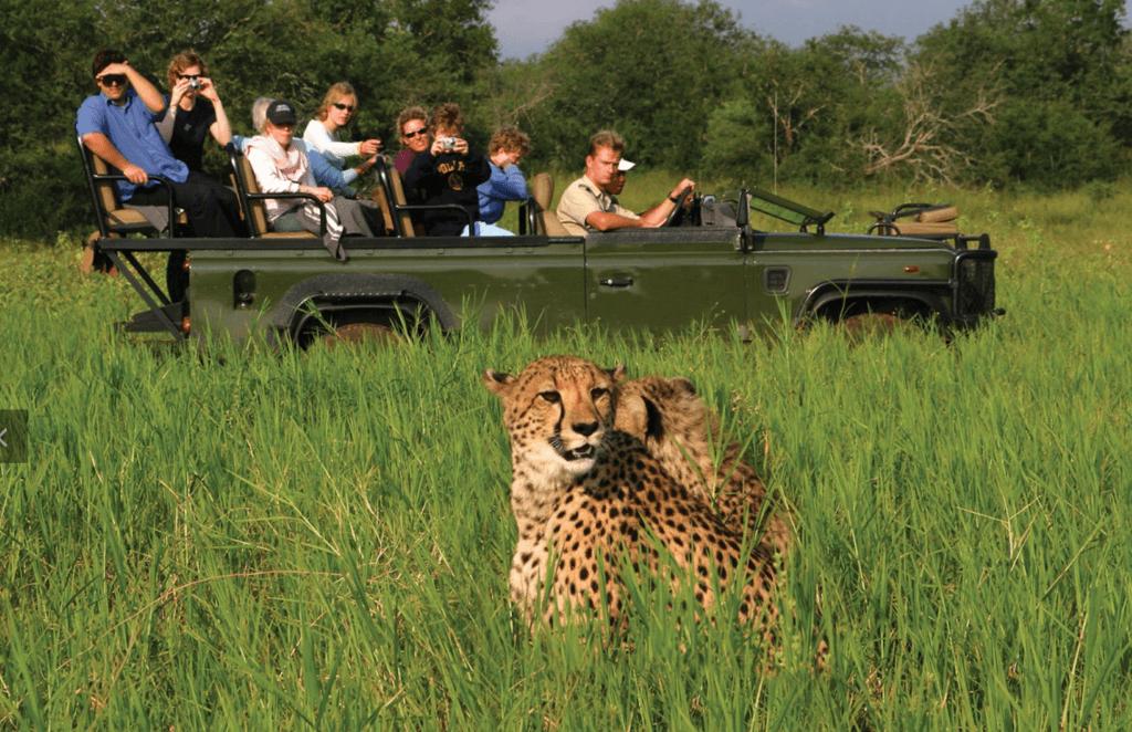 Kruger & Serengeti Parks