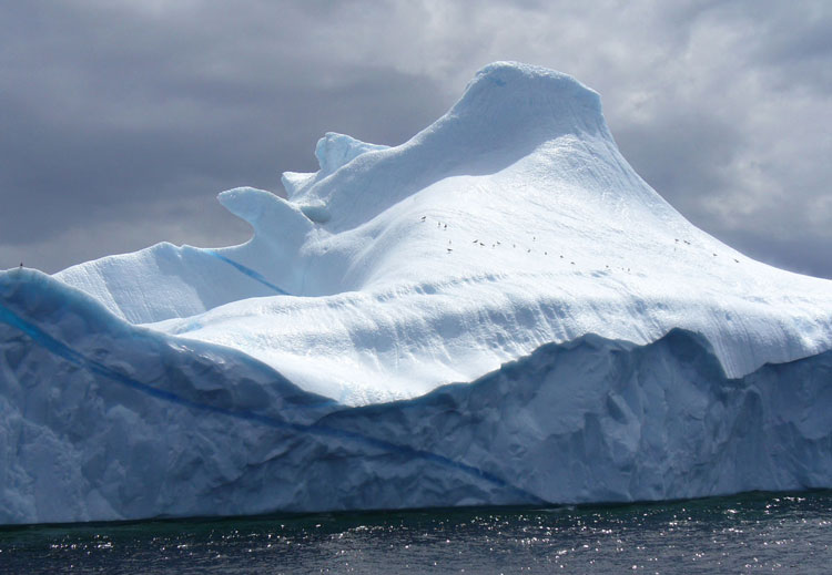 Iceberg Circum Nfld